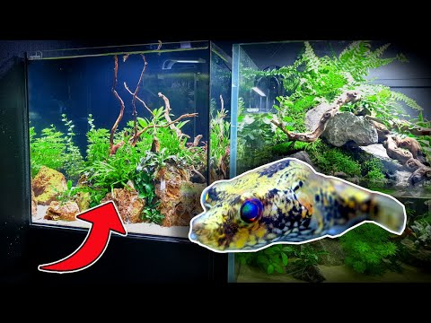DRAGON PUFFER ISLAND - This Is The COOLEST Fish I've Ever Owned!....(Planted Tank Aquascape)