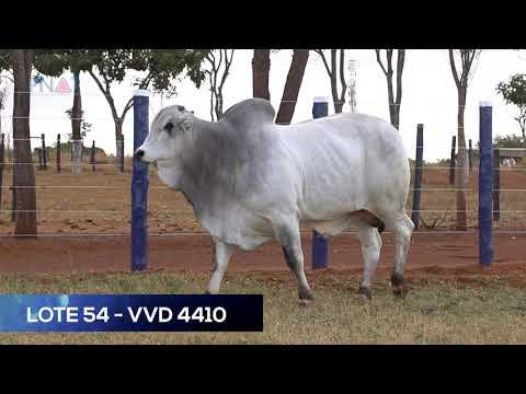 LOTE 54 - VVD4410 - NELORE