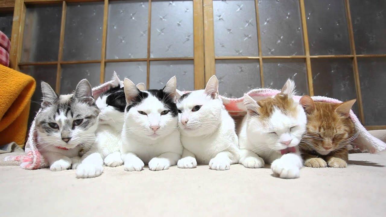 6 u5339 u306e u732b six cats 2015 2