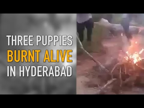 The Quint: Animal Cruelty: Three Puppies Burnt Alive in Hyderabad