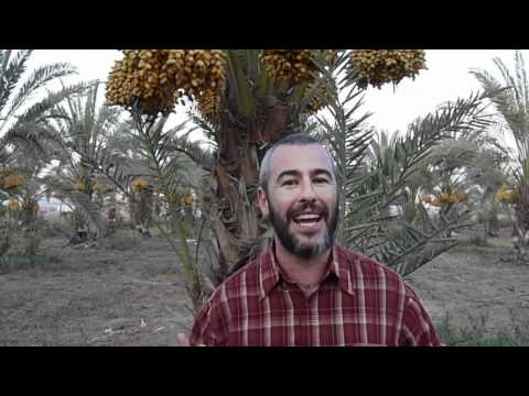 """Be An Organic Jew, Embrace Dates of Israel""  Eye On Zion - Israel TV"
