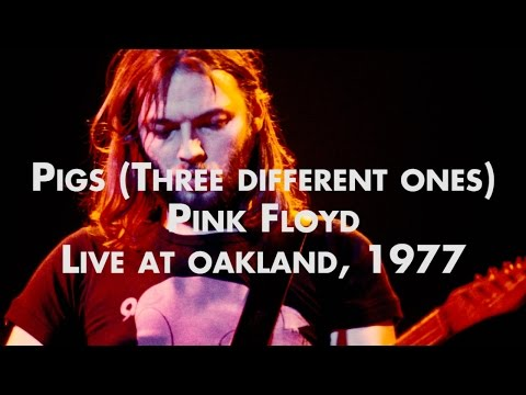 Pink Floyd - Pigs (Three Different Ones) - Live at Oakland