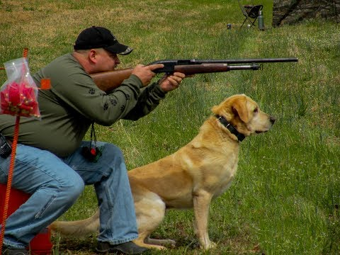 5 BEST HUNTING DOG BREEDS