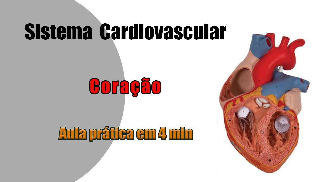 Anatomia Cardiovascular Coração Aula Prática 1