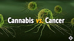 How and Why Does Cannabis Kill Cancer? The Science Explained