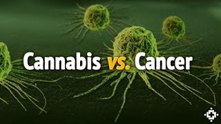 Cannabis OIL ~ Important Info | Cancer Quick Facts