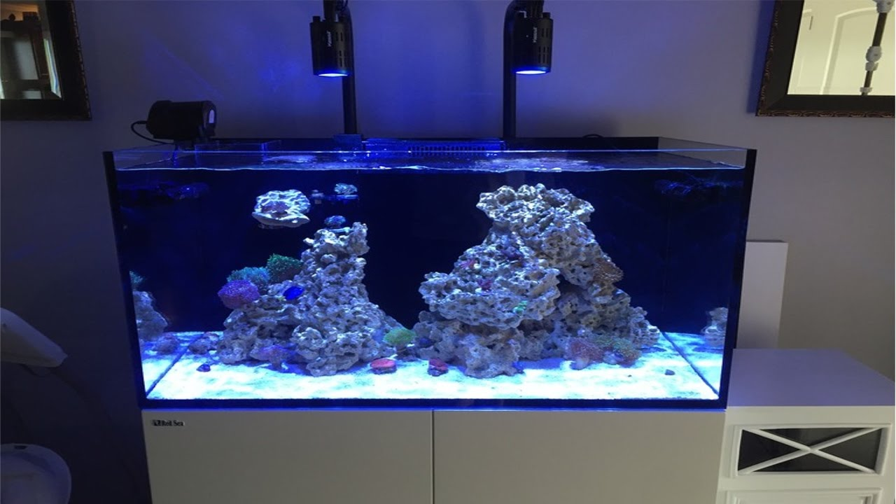red sea reefer 250 deluxe