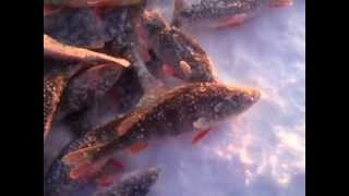 Рыбалка-Озеро-Таватуй.