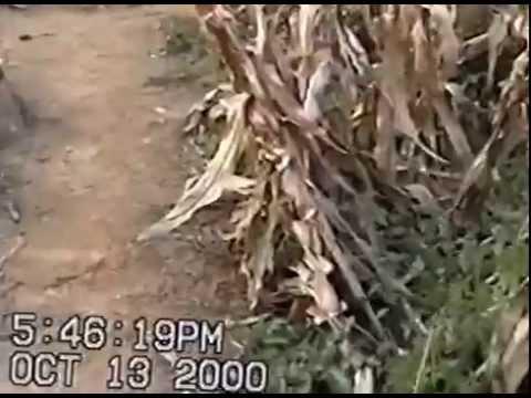 Corn Maze 2000