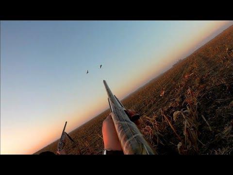 Охота на гуся 2019. Красивая охота в Саратовской области.