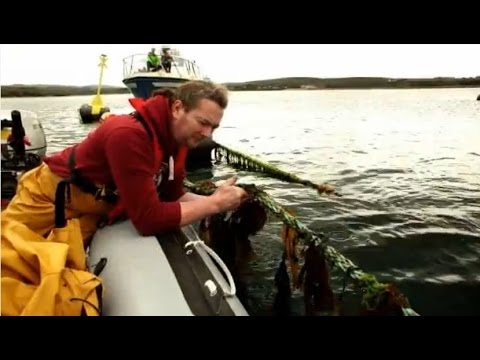 At~Sea - A new dimension of seaweed farming