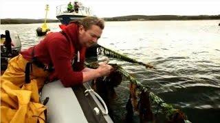 At~Sea - A new dimension of seaweed farming