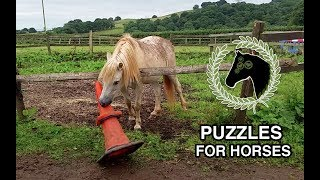 Horse solves puzzle | Problem solving and cognitive enrichment
