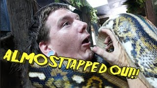 he-got-choked-while-handling-huge-snake-ouch