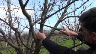 Repeat youtube video Rezidba šljiva u voćnjaku Knežević - Nova Šarovka (Staro Čomborje), 7.3.2014.