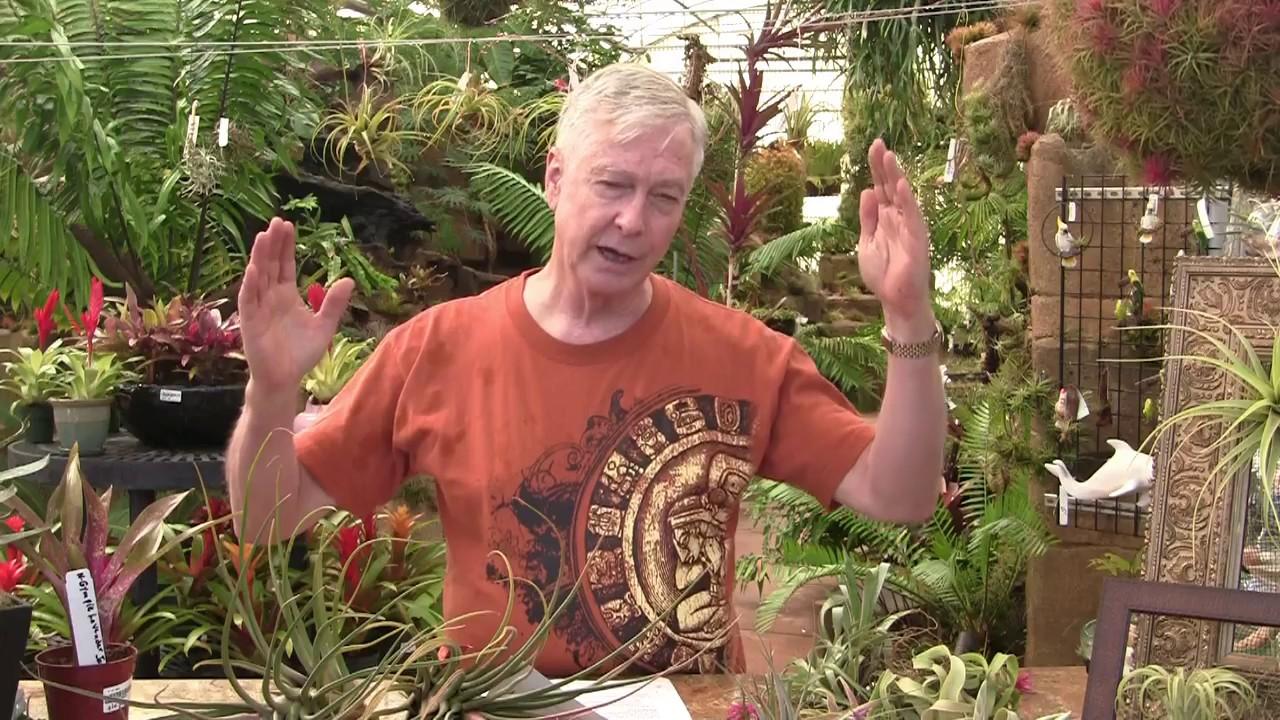 Paul Isley Rainforest Flora Inc Ask Mr Tillandsia Episode