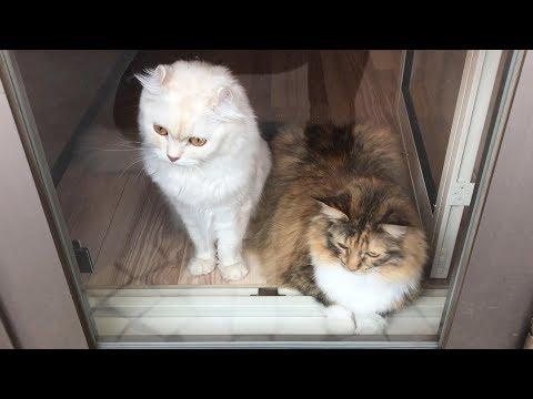 猫に閉め出されて困っています。