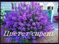 Цветет сирень группа САДКО mp3