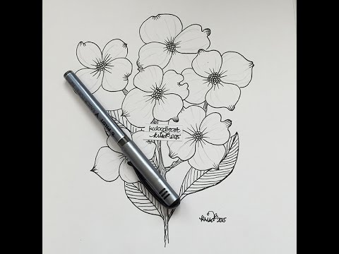 0cf2cd0ef how I draw a dogwood bloom - YouTube