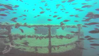 Big Blue Diving Mallorca -