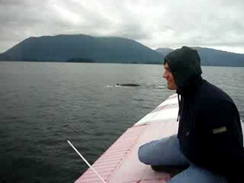 learning to fly a cessna 185 float plane and whales