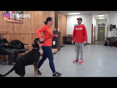 Having trouble with your dog? Watch this dog training video