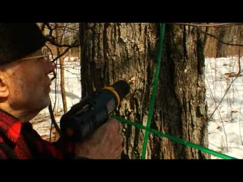 Jim & Bob Gibbs make maple syrup the old fasioned way.
