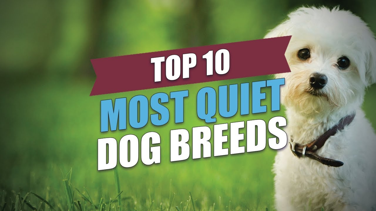 The quietest breeds of dogs: a list, a photo and a description