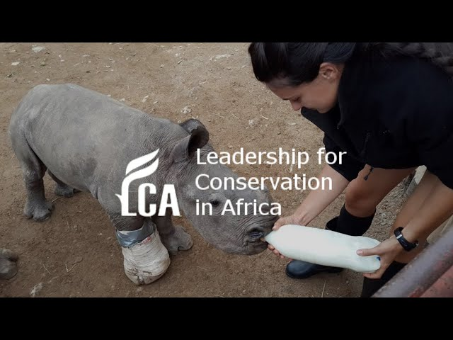 Travel and volunteer in Africa to help wildlife