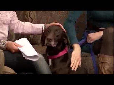 Doggie Dash And Dawdle 2012