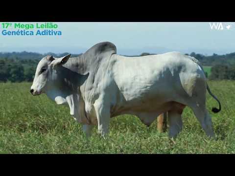 LOTE 97 - REMP 558 - 17º Mega Leilão Genética Aditiva 2020