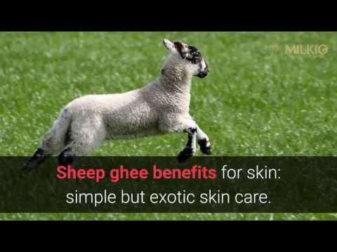 Sheep ghee benefits for skin:  simple but exotic skin care | Milkio Foods