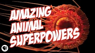 Nature's Most Amazing Animal Superpowers
