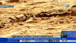 Фото скелета ящерицы на Марсе?