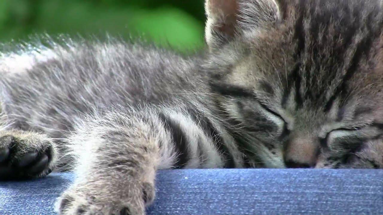 Katzenbaby Videos