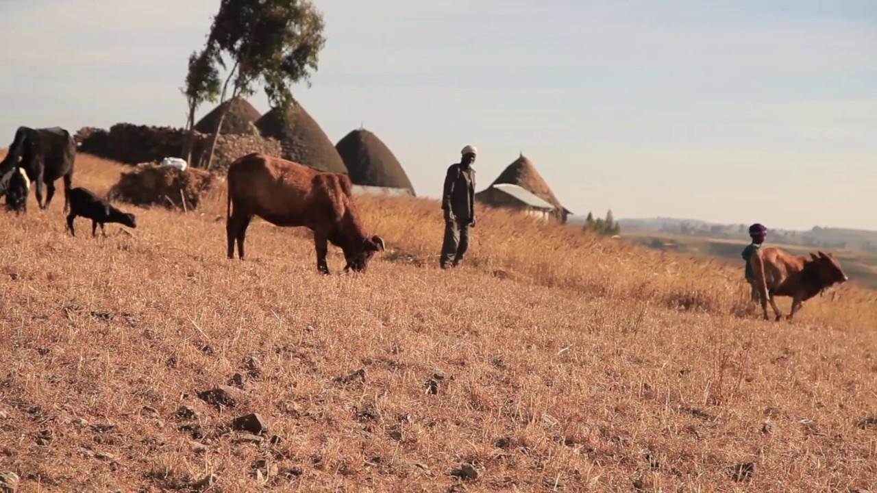 ጉዞ ኢትዮጵያ-Travel Ethiopia-Menz Cultural Village Intro