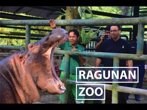 Bersepeda Santai di Ragunan Zoo