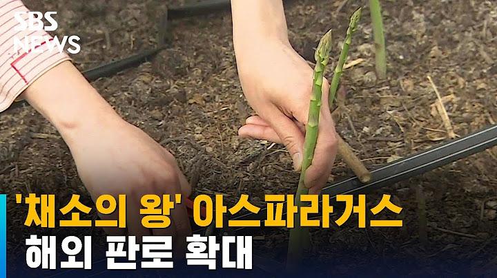 제철 맞은 '채소의 왕' 아스파라거스…해외 판로 확대 / SBS