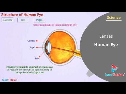 Wonders of Light Part 1 Standard 10 SSC Science | Part:12 Functioning of Lens in Human Being
