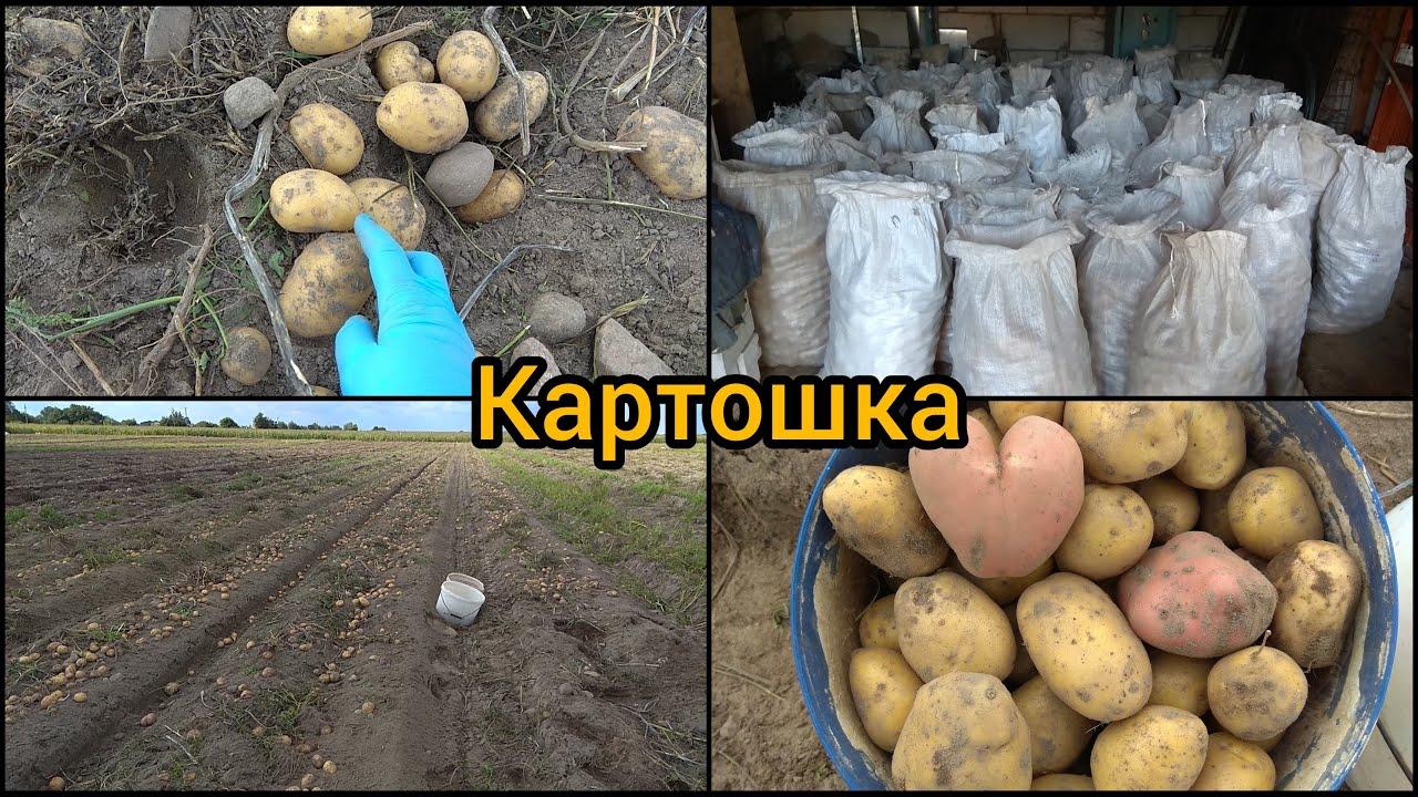 Беларусь Копаем Картошку