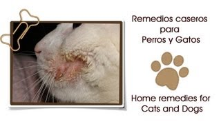 Remedios caseros para perros y gatos ♥ Home remedies for dogs and cats Thumbnail