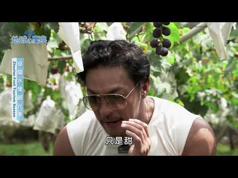 台灣-地球的慶典-EP 94 卓蘭水果觀光季