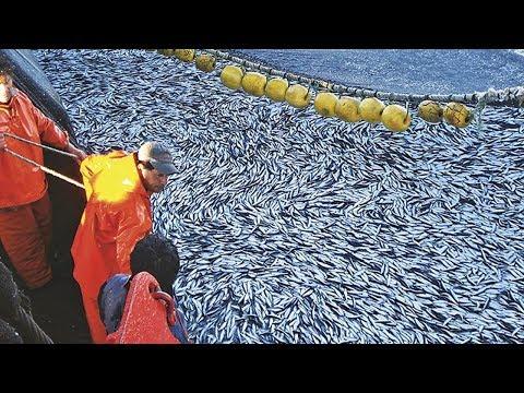 Amazing  Skill Fishermen Big Catch Fishing Thousands Of Tons, Net Fishing In The Sea