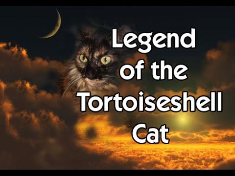Legend of the Tortoiseshell Cat