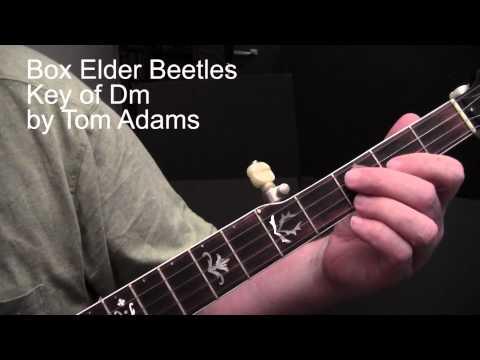 Box Elder Beetles  Tom Adams banjo lesson