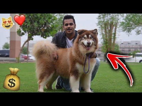اخيرا شريت اجمل كلب اللي راح يعوضني بمكان روكي !!