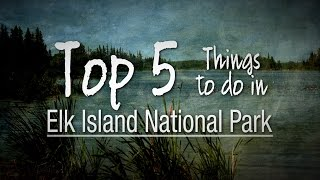 5 Things To Do At Elk Island National Park