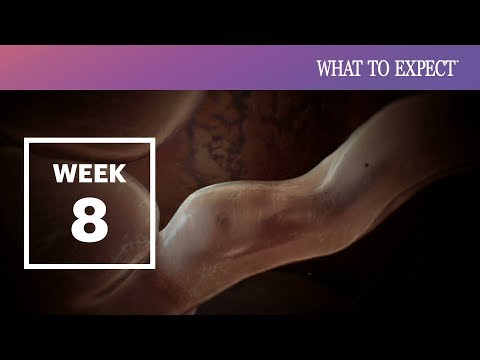 12 Weeks Pregnant | What To Expect from YouTube · Duration:  1 minutes 49 seconds