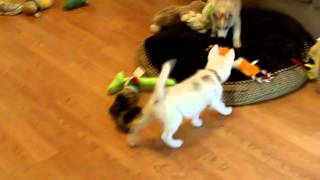 The Bosco and Lulu Show Episode 2 So Many Toys, so Little Time