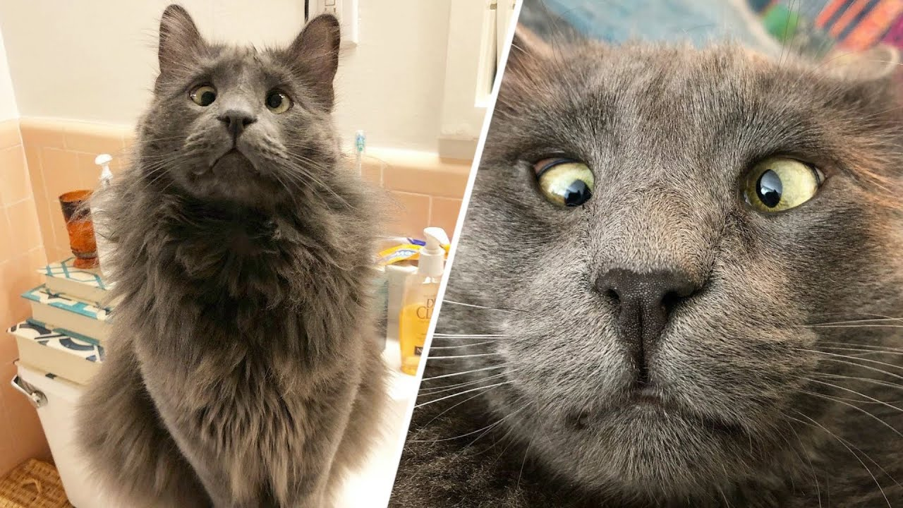 Woman wins lottery to take this cross-eyed shelter cat home